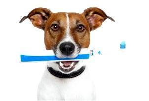 Стоматологическая помощь животным